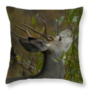 3x3 Buck Mule Deer-signed-#9716 Throw Pillow