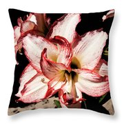 Amaryllidaceae Hippeastrum Amorice Throw Pillow