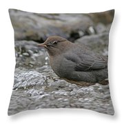 American Dipper Throw Pillow