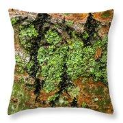 Aspen Bark After The Rain Throw Pillow