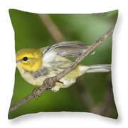Black-throated Green Warbler Throw Pillow