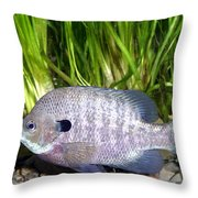 Bluegill Lepomis Macrochirus Throw Pillow