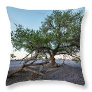 Broken Tree Near Dirt Road At Sunny Day Throw Pillow