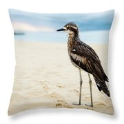 Bush Stone-curlew Resting On The Beach. Throw Pillow