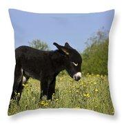Donkey Foal Throw Pillow