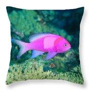 Fiji, Reef Scene Throw Pillow