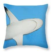 Grey Reef Shark Throw Pillow