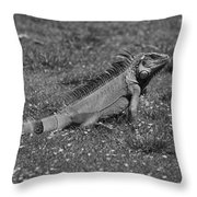 I Iguana Throw Pillow