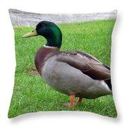 New Zealand - Male Mallard Duck Throw Pillow
