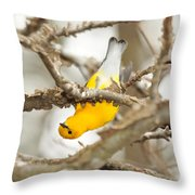 Prothonotary Warbler Throw Pillow