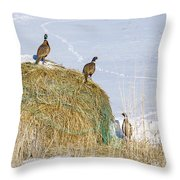 4 Roosters And A Hen Throw Pillow