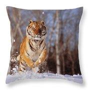 Siberian Tiger Throw Pillow