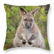Wallaby Outside By Itself Throw Pillow