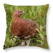 Willow Ptarmigan Throw Pillow