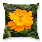 Australia - Cosmos Carpet Yellow Flower Throw Pillow