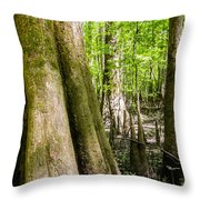 cypress forest and swamp of Congaree National Park in South Caro Throw Pillow