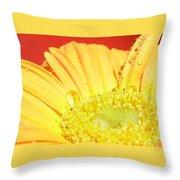 4173-001 Throw Pillow