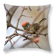 4369 - Ruby-crowned Kinglet Throw Pillow