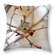 4370 - Ruby-crowned Kinglet Throw Pillow