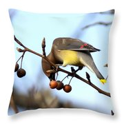4424 - Cedar Waxwing Throw Pillow