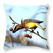 4427 - Cedar Waxwing Throw Pillow