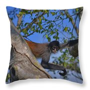 48- Capuchin Monkey Throw Pillow