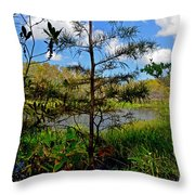 49- Florida Everglades Throw Pillow