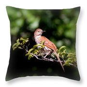 4979 - Brown Thrasher Throw Pillow