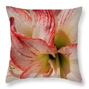 Amaryllidaceae Hippeastrum Amorice Throw Pillow