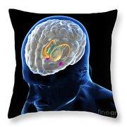 Anatomy Of The Brain Throw Pillow