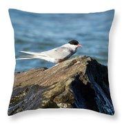 Arctic Tern Throw Pillow