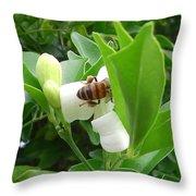Australia - The Bees Throw Pillow