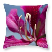 Bauhinia Purpurea - Hawaiian Orchid Tree Throw Pillow by Sharon Mau
