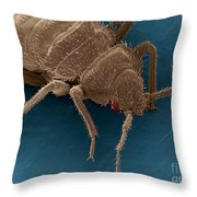 Bedbug, Cimex Lectularius, Sem Throw Pillow