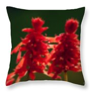 Blurred Seasonal Flower With Dark Background Throw Pillow