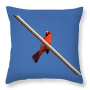 5- Cardinal Throw Pillow