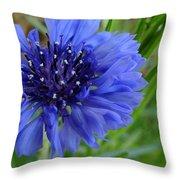 Centaurea Cyanus 2 Throw Pillow