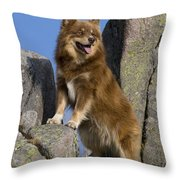 Finnish Lapphund Throw Pillow