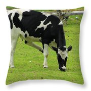 Holstein Cow On A Farm Throw Pillow