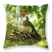 Immature Hooded Merganser Throw Pillow