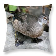 Juvenile Male Wood Duck Throw Pillow
