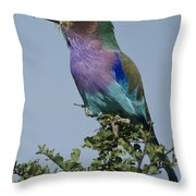 Lilac-breasted Roller Throw Pillow