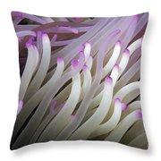 Micronesia, Marine Life Throw Pillow
