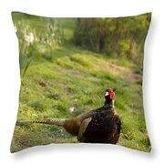mr Pheasant Throw Pillow