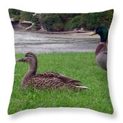 New Zealand - Mallard Ducks On The Grass Throw Pillow