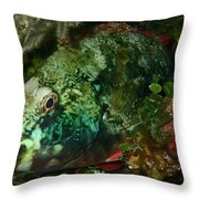 Parrot Fish Throw Pillow