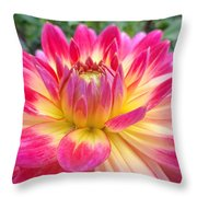 Pink And Yellow Dahlia Throw Pillow