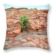 Sandstone Color In Valley Of Fire Throw Pillow