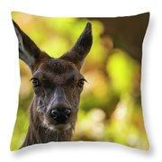 Stunning Hind Doe Red Deer Cervus Elaphus In Dappled Sunlight Fo Throw Pillow