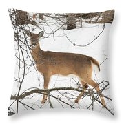 White-tailed Deer Throw Pillow